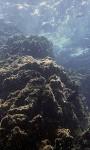 Koh Bon – Spectacular Marine Life Ecstasy